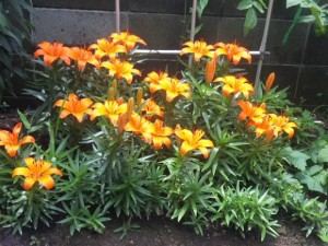 henmiflower-s